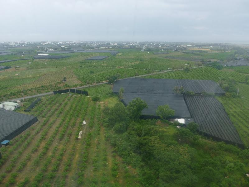 Taitung, des dizaines d hectares de plantations de fruits