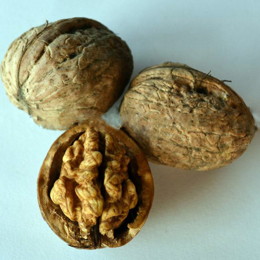 Юпитер грецкий орех