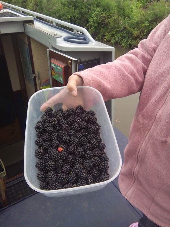 [blackberries%5B2%5D]