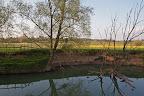 OU SONT LES CARPES ??La Vallière en Saône et Loire, Sagy