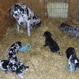 Gretta & Cobalt Blues 3/24/12 litter - SAM_3372.JPG