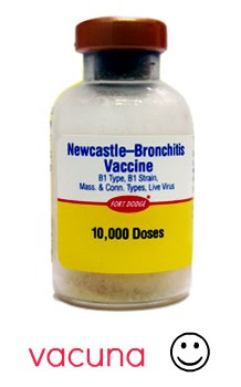 Newcastle-Bornchitis-Vaccine-4.jpg