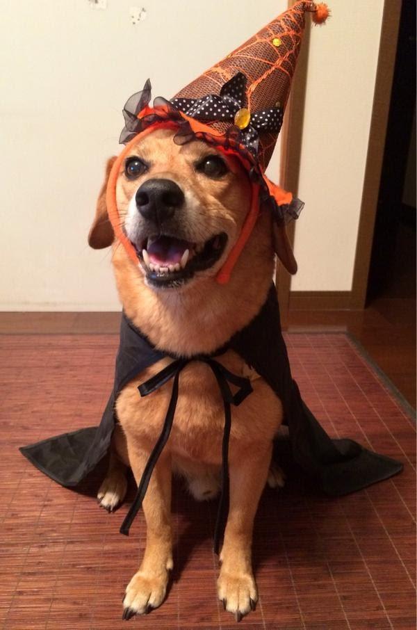 halloween-costume-pet01.jpg