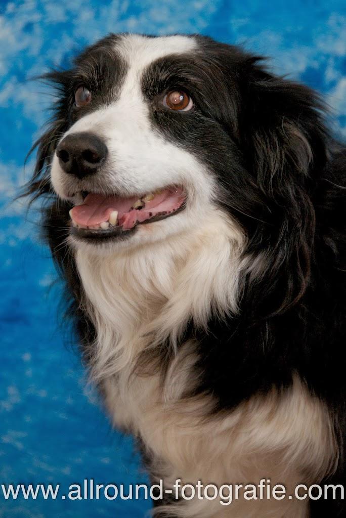 Huisdierreportage Hondendag Uden Dierendag (4 oktober 2008) - 10