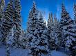 Snowshoeing White Pine - 7