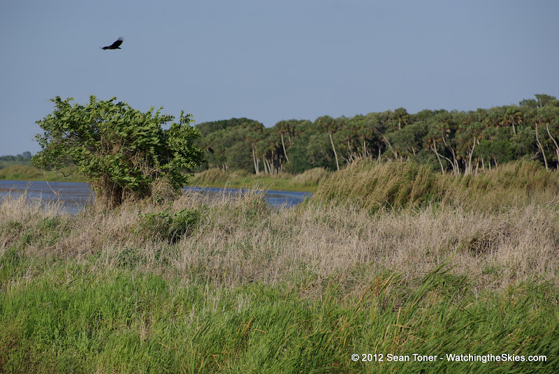 04-06-12 Myaka River State Park - IMGP4443.JPG