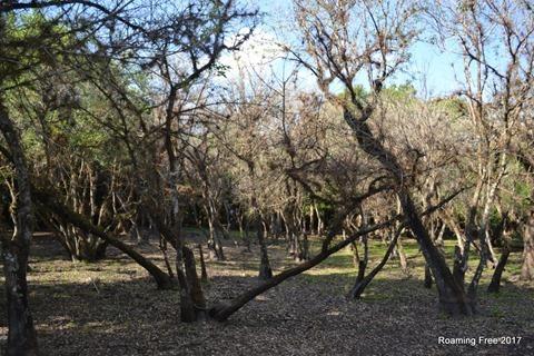 Pot Ash Forest