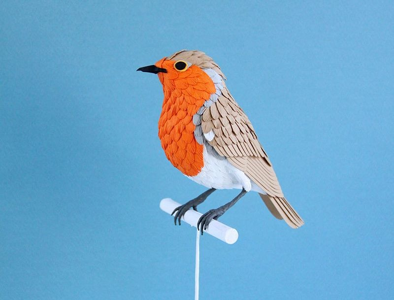 diana-beltran-herrera-birds-15