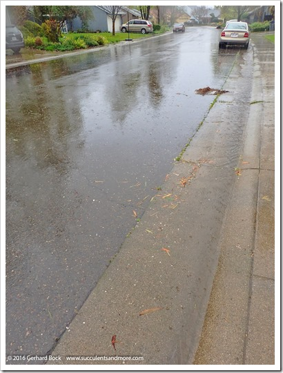 160311_rain_013