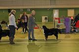 – Nyborg søndag. Excellent, 3. vinder i Åben Klasse med CK