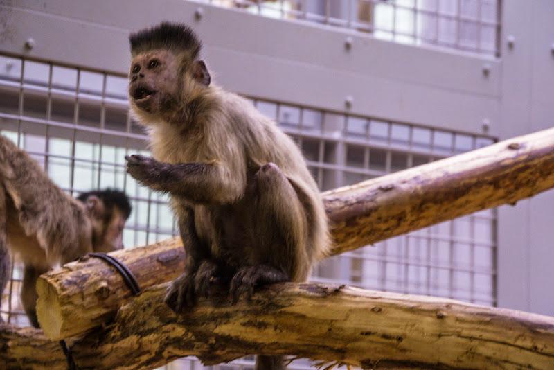 札幌 円山動物園 写真7