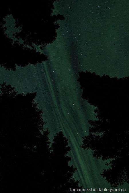 [aurora4%5B8%5D]