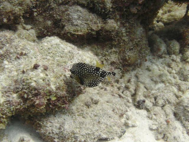 Bonaire 2011 - PICT0029.JPG