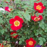 Gardening 2011 - 100_7309.JPG