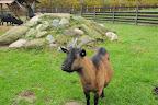 jak se vlastně volá na kozy?