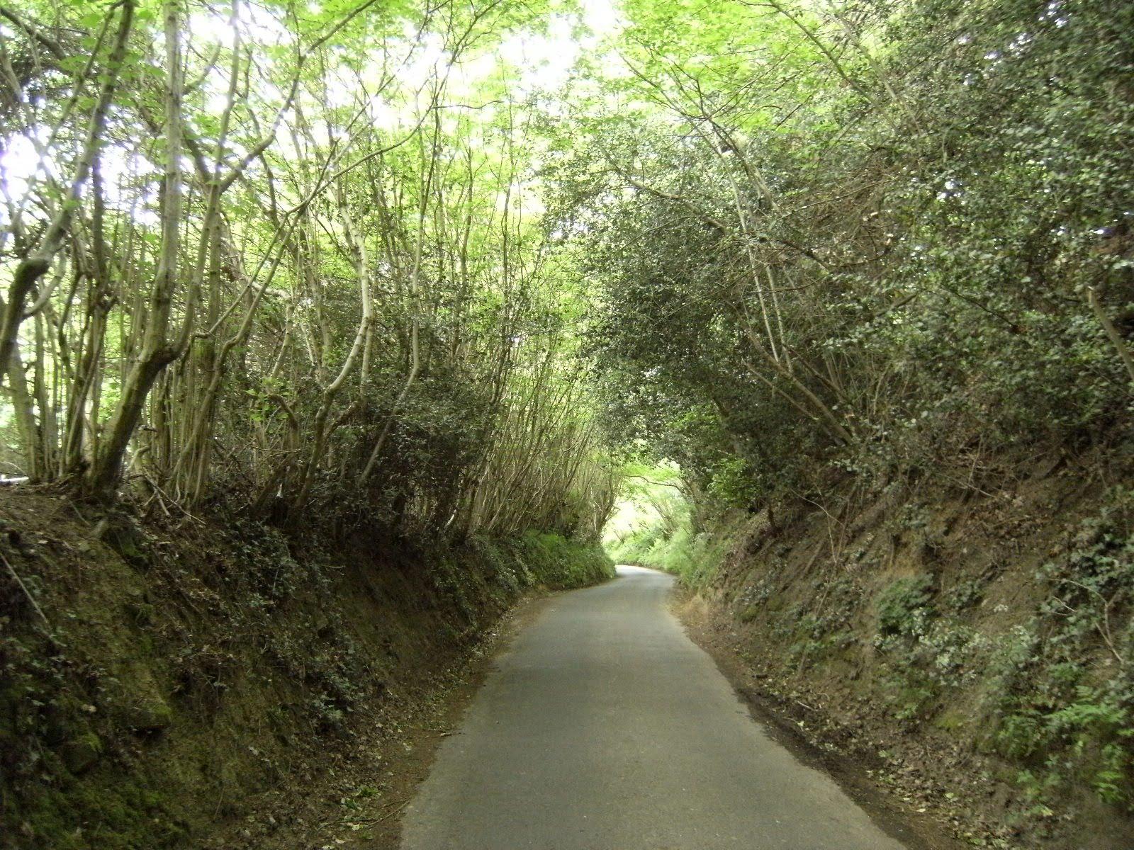 DSCF8004 Sunken road back to Eridge station