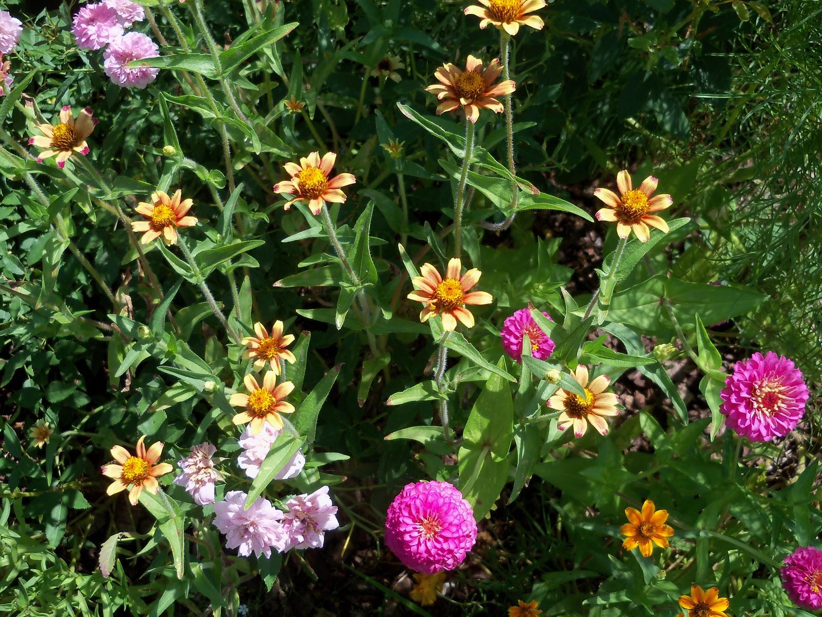 Gardening 2010, Part Three - 101_4372.JPG