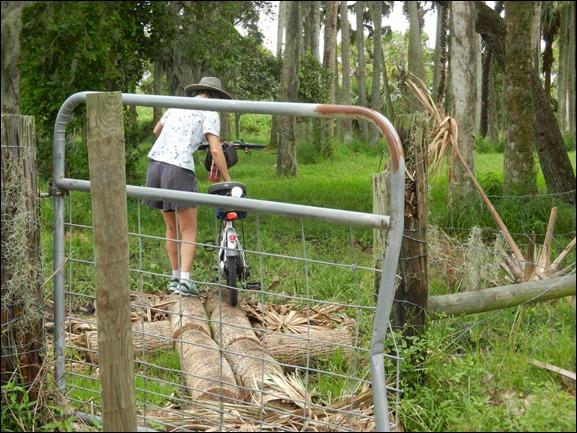 Log Crossing (4)