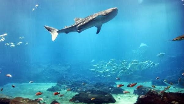 Georgia Aquarium Google