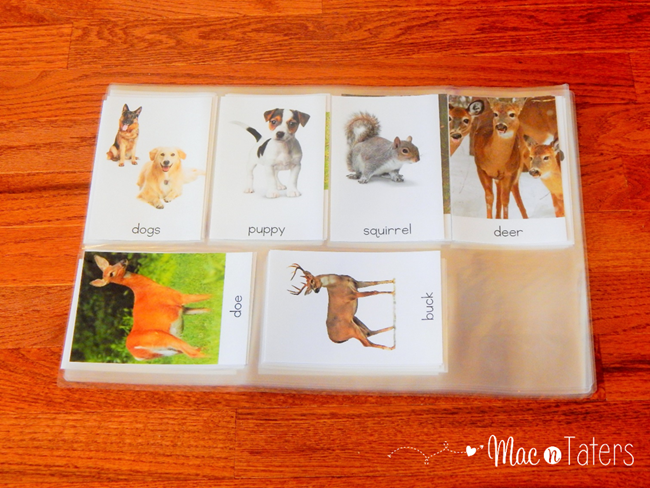 montessori animal cards1