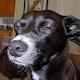 Pancho Fernandez's profile photo