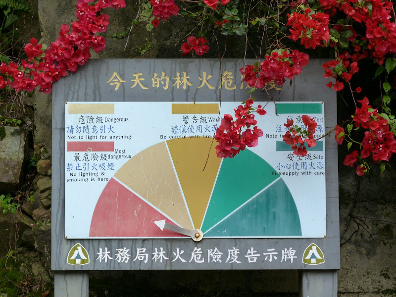 TAIWAN  Dans la region d ALISHAN - P1130728.JPG