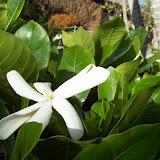 Hawaii Day 6 - 100_7576.JPG