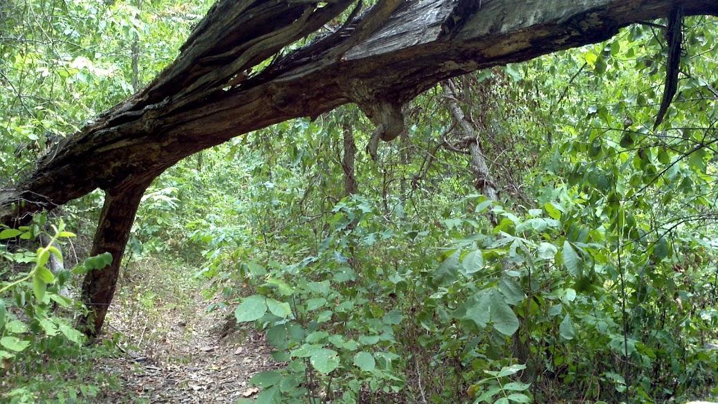 AR, hiking, Mt Sequoyah, Fayetteville