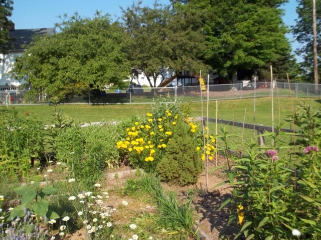 Melissa Jones Schoolyard Habitat Garden - Image%2B7.jpg