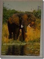 594 11-carte postale