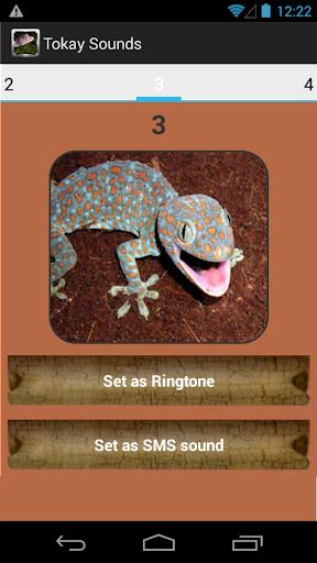 玩免費音樂APP|下載Tokay Gecko Sounds app不用錢|硬是要APP