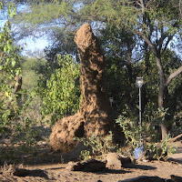 Tuli Block - a termite mound with a distinctive shape