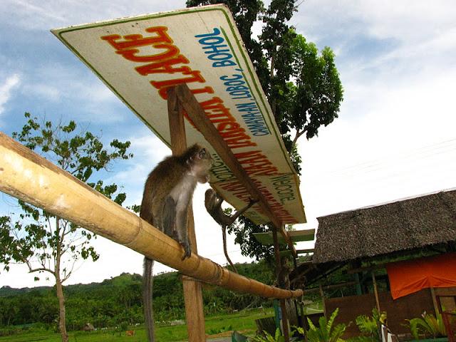 Из зимы в лето. Филиппины 2011 - Страница 3 IMG_0161