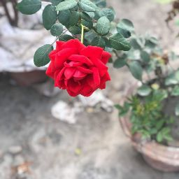user Asma Kareem apkdeer profile image