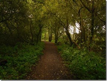 11 lovely woods at alvecote