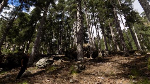 Dans la seule zone claire de la montée vers le col de Saltare