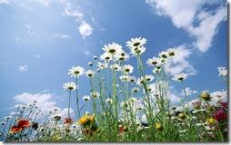 margaritas flores (14)