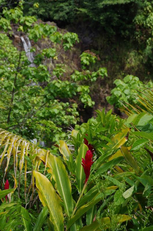 06-23-13 Big Island Waterfalls, Travel to Kauai - IMGP8921.JPG