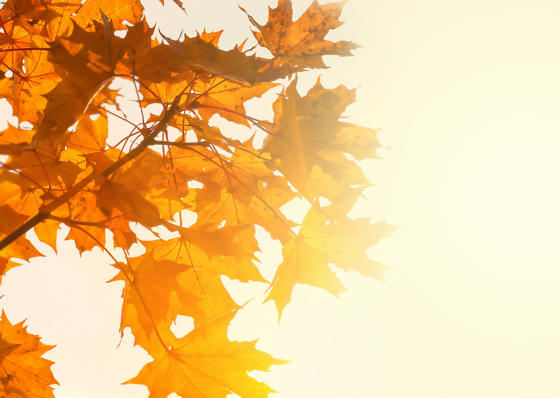 Autumnal leaves in a post about five simple ways to feel cosy this Autumn.