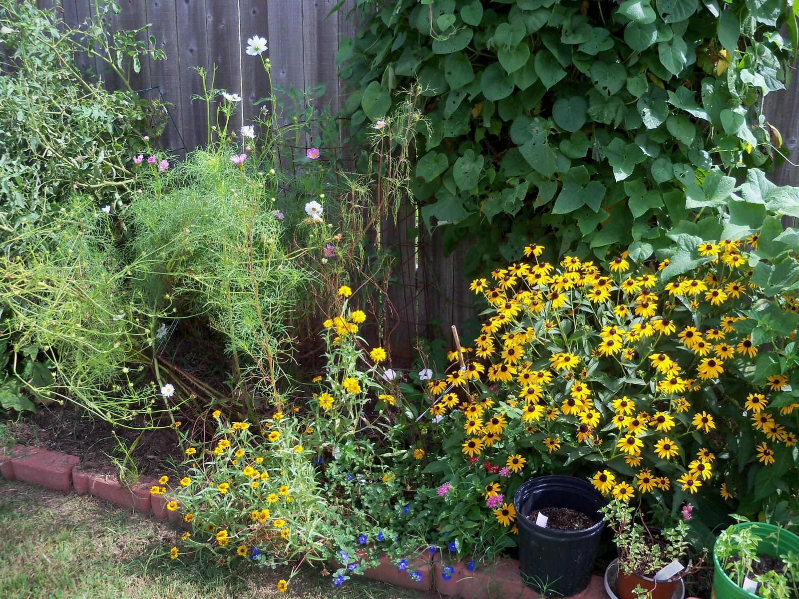 Gardening 2010, Part Three - 101_5197.JPG