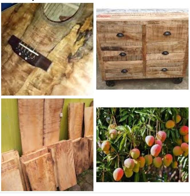 kekurangan dan kelebihan kayu mangga untuk furniture