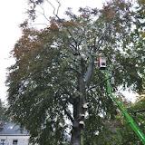 150 jaar oude beuk verwijderd - boom.jpg