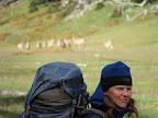 Guancos y Sophia Sofia Cruce de Tierra del Fuego Trekking Desde Estancia Carmen al Lago Fagnano, y desde la Sierra Valdivieso al Canal Beagle! 7 dias de Trekking intenso.