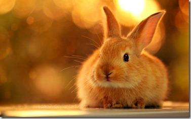 vaccino coniglio - 1