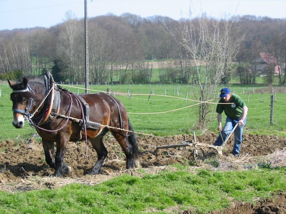 Thème de Janvier : le cheval au travail IMG_0704
