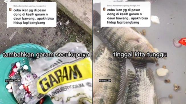 Ditonton 17 Juta Kali di Tiktok, Pria Bagikan Cara Hidupkan Ikan Mati Pakai Garam