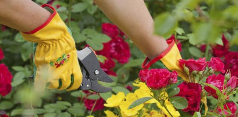reeducandas-farao-cultivo-de-flores-para-comercializacao-em-cuiaba