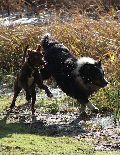 Les remarques faites sur vos chiens... et vos réparties! - Page 2 IMG_0019