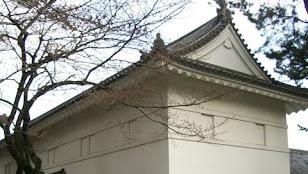 桜つぼみの小田原城