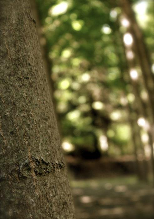 Tronco de árbol en primer plano y luces entre verde al fondo